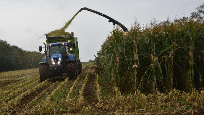 Récolte du maïs fourrage