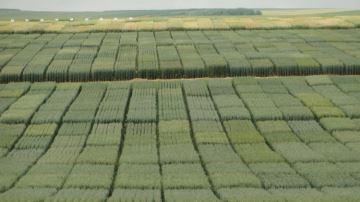 Premiers résultats d'essais pour les variétés d'orge et de blé