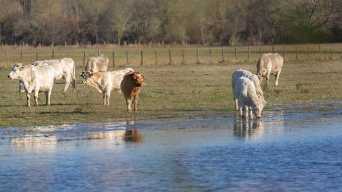 Les zones de pâtures humides sont les plus dangereuses au niveau parasitisme