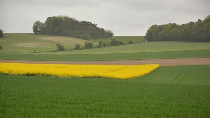 Paysage agricole.