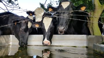 Plus d'eau pour plus de lait, c'est possible!