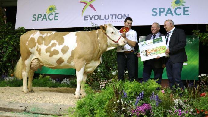 Hawaï (Rotax x Moldav), meilleure vache en cours de 3ème lactation