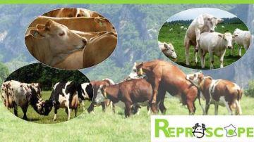 L'observatoire Reproscope permet de se comparer à d'autres élevages
