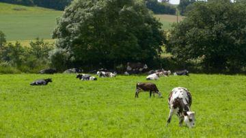 Détectez vos vaches à cellules à partir d'un seul échantillon de lait de tank