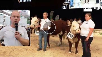 Rustique, fertile et docile: la Hereford a la cote dans les élevages français