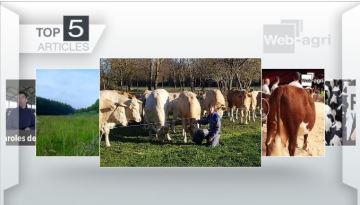 Faire parrainer ses vaches et la race Hereford: les deux sujets les plus lus