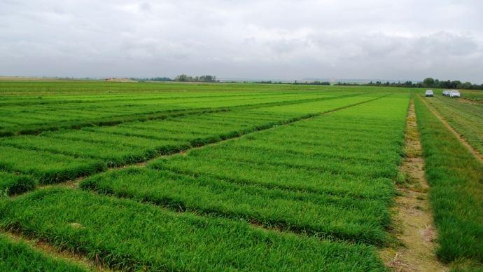 Le choix des variétés de graminées et légumineuses à semer se fait en fonction des critères variétaux