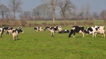 Près de 25% des éleveurs souhaiteraient arrêter les vaches laitières