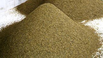 La filière colza mise à mal soumettra les élevages français au soja américain