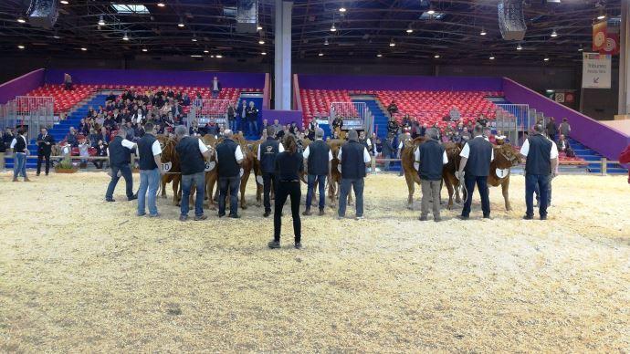166 animaux de la race Limousine sont en lice pour figurer parmi les 40 meilleurs qui participeront au concours général agricole du SIA 2018