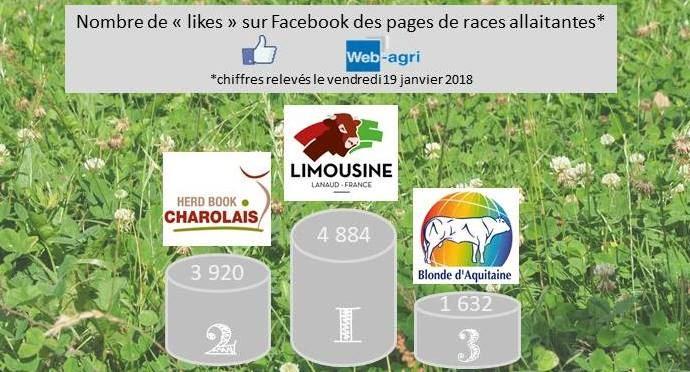 La page Facebook de la Limousine dépasse celle de la Charolaise sur Facebook. La blonde d'Aquitaine se retrouve à la troisième place, loin derrière.
