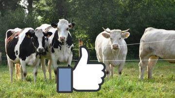 Quelles races sont les plus présentes sur Facebook?