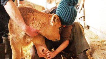 Une ex-vétérinaire rurale sort du silence et dévoile l'envers du décor
