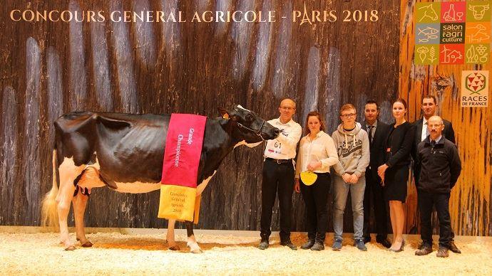 La grande championne Holstein du Sia 2018: Stel Jefa