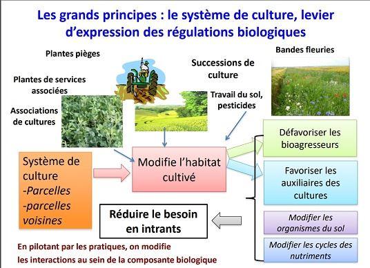 Le système de culture, levier d'expression des régulations biologiques