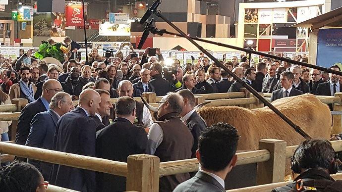 Emmanuel Macron, lors de son passage devant Haute, la vache égérie de race Aubrac, au salon de l'agriculture 2018.