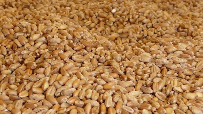 L'USDA a revu à la hausse sa prévision des exportations russes, tandis que Franceagrimer a revu à la baisse les exportations françaises de blé tendre pour la campagne 2017-2018.