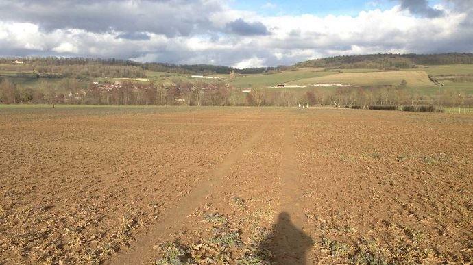Colza gelé et inondé en Bourgogne