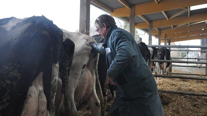 Gènes diffusion lance de nouveaux index économiques et de santé pour les vaches laitière