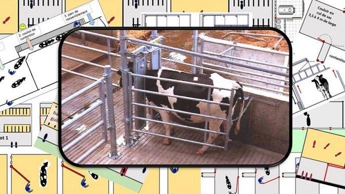 Des installations les plus simples au plus compliquées, il existe de nombreuses possibilités pour manipuler les bovins. Quelque soit la technique, l'objectif doit rester le même: manipuler en toute sécurité et sans stress.