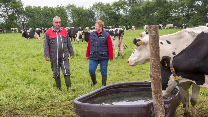 agriculteur et agricultrice au milieu des vaches laitieres