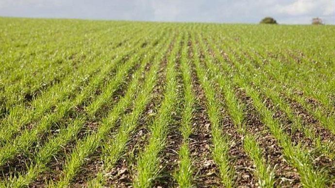 Pour optimiser l'implantation de la nouvelle prairie, il faudra d'abord éliminer toutes les causes de dégradation de l'ancienne et veiller à une bonne exploitation de la parcelle.
