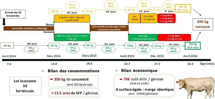 L'engraissement des Blondes d'Aquitaine à l'herbe: une finition plus longue