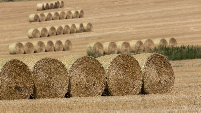 Jusqu'à 1 tonne de plus par hectare