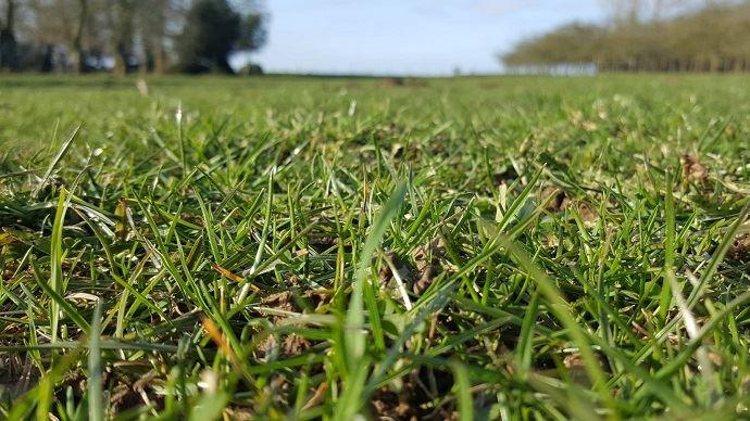 L'herbe est dans l'Aire