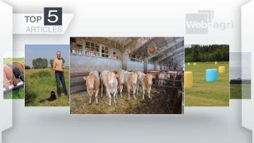 Les films d'enrubannage colorés et le marché des bovins viande à la Une