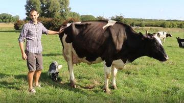 Laurent Dacquin, éleveur (62) : «Emmener ma vache au Space, c'est le Graal! »