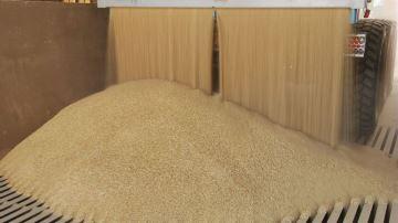 Ventiler les céréales dès la mise en stockage de la récolte
