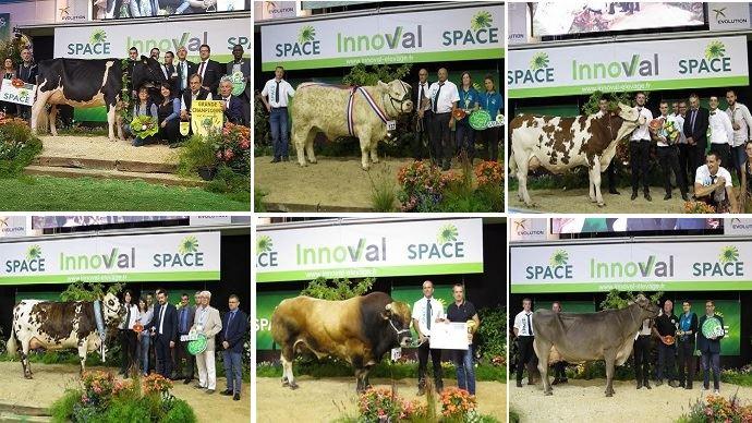 Palmarès de tous les concours bovins du Space 2018 à  découvrir ci-dessous.