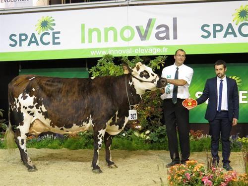 France, meilleure laitière normande et meilleure mamelle adulte.