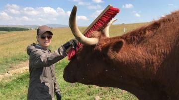Les éleveurs mettent en avant leurs pratiques sur les réseaux sociaux