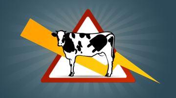 Une prise de terre pour limiter le stress des vaches!