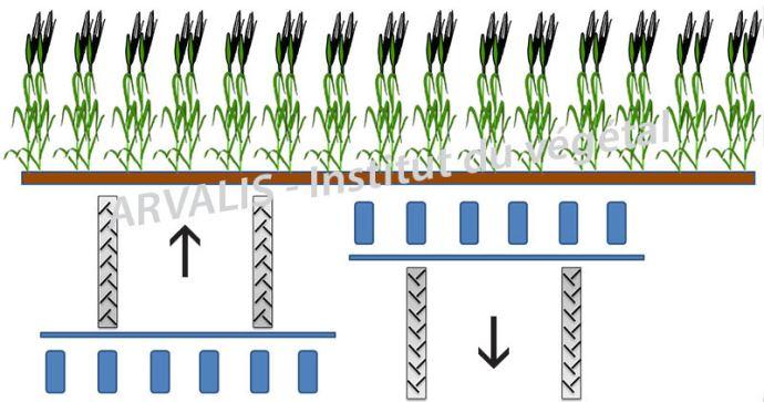 Configuration possible pour le semis de la culture relai (Voie du tracteur: 180 cm / Ecart. rangs: 60 cm)