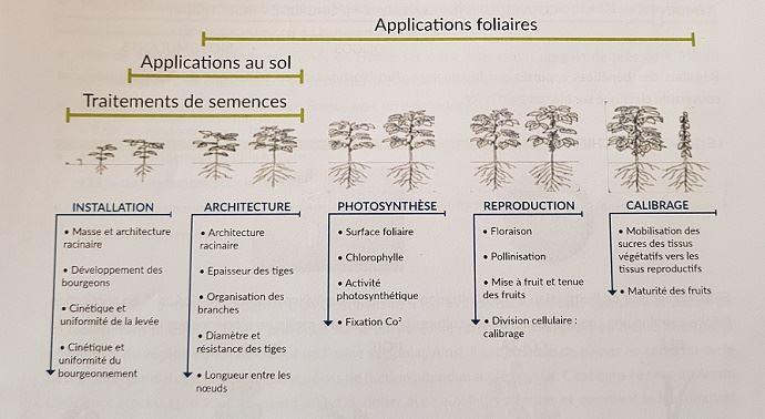 Applications et objectifs des biostimulants