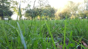 Quelles espèces pour des prairies productives, durables et équilibrées?