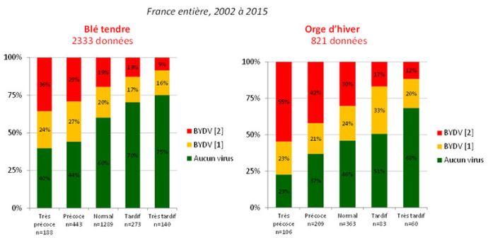 Intensité de détection de virus de la jaunisse nanisante de l'orge (BYDV) selon la date de semis