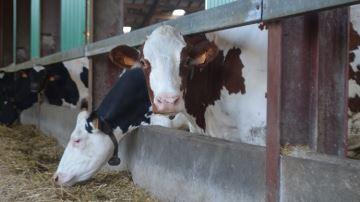 Sur Youtube, Thierry Baillet s'interroge: «Quel avenir pour l'élevage? »