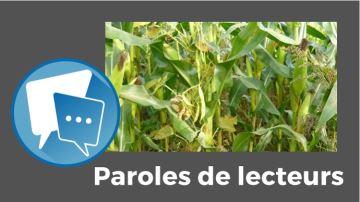Comment trouver la bonne plante compagne pour votre maïs?