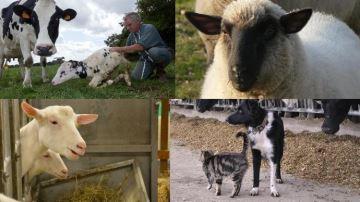 2019: l'année de la lettre P pour nommer veaux,chèvres, brebis, chiens, chats