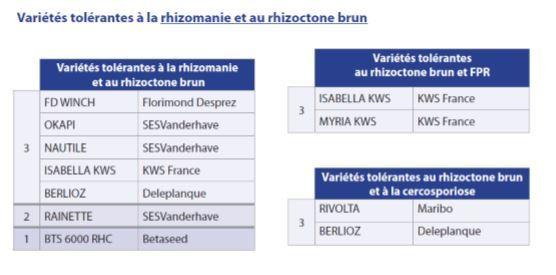 Variétés tolérantes à la rhizomanie et au rhizoctone brun