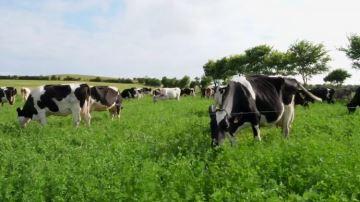 Plus d'herbe pour réduire le lessivage: des éleveurs bretons s'y engagent