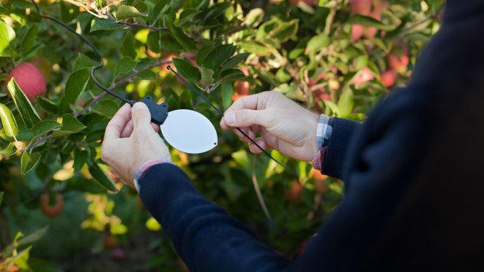 En plus de l'humectation et de l'hygrométrie, le capteur Leafcrop relève la température «humide»