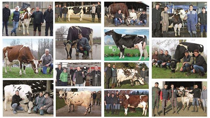 L'élection des meilleures vaches laitières Evolution visait à mettre en avant des animaux des animaux inconnus des concours et publications mais qui sont rentables qui font la réussite et la fierté de leurs éleveurs.