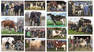 14 pépites Holstein, Normande et Pie Rouge récompensées par Évolution