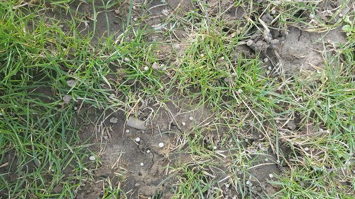 Effectuer son premier apport d'azote sur prairie de bonne heure vise à obtenir un pic de production le plus tôt possible.