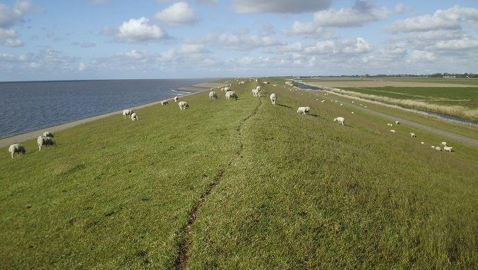 En zone littorale, les Safer auront un droit de préemption élargi.